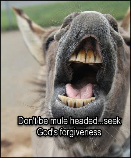 don't be a mule